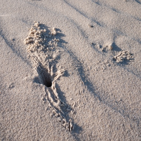 Crab holes in the sand at Tallows Beach, Arakwal National Park