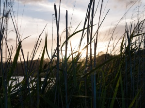 Sunset through the reeds at Tallows Creek, Arakwal National Park