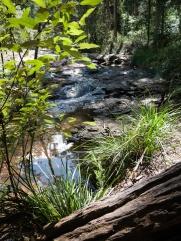 Meandering Stream along the Minyon Loop Walking Track, Nightcap National Park
