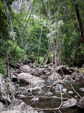Vines Hanging over the River Downstream from Minyon Falls, Nightcap National Park