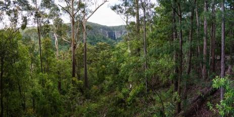 View of Minyon Falls from the Minyon Grass Picnic Area , Nightcap National Park