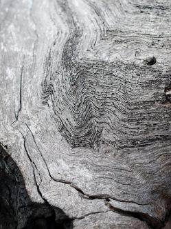 Waves of weathering, Mount Cooke, Monadnocks Conservation Park