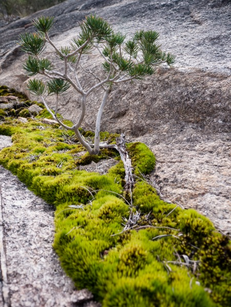 Life on the outcrop, Mount Cooke, Monadnocks Conservation Park