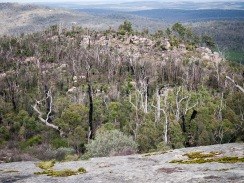 Burnt stags, Mount Cooke, Monadnocks Conservation Park